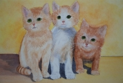 <p>3 chatons 40x30 cm vendu </p>
