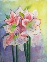 <p>Amaryllis. 20x30 disponible </p>